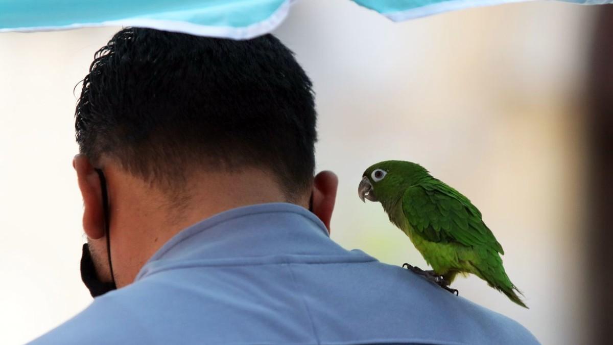 Mascotas no contagian el virus de COVID-19 a humanos: UNAM