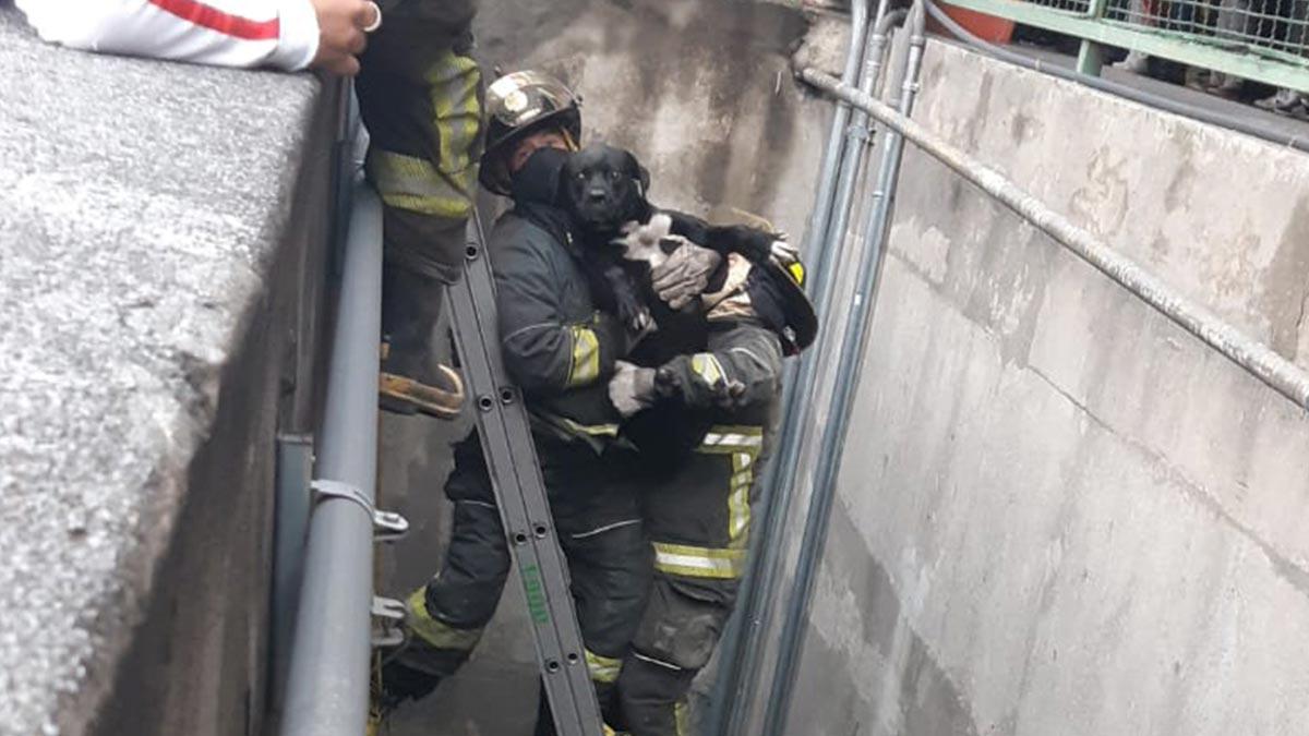 CDMX: Cae perrito en cercanías de la Línea 3 del metro