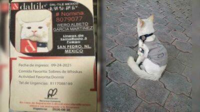 En Nuevo León, un gato es contratado por empresa y se viraliza