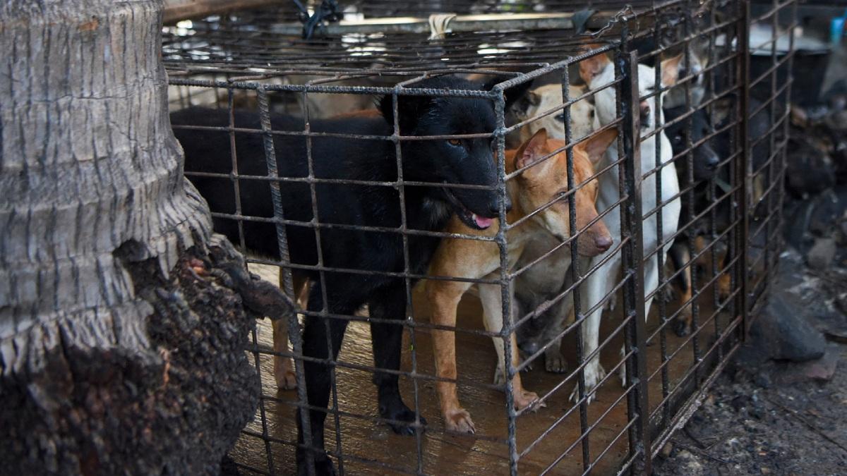 Países Comen Carne De Perro