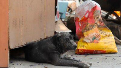 Tamaulipas: Intercambian tatuajes por croquetas para perritos callejeros