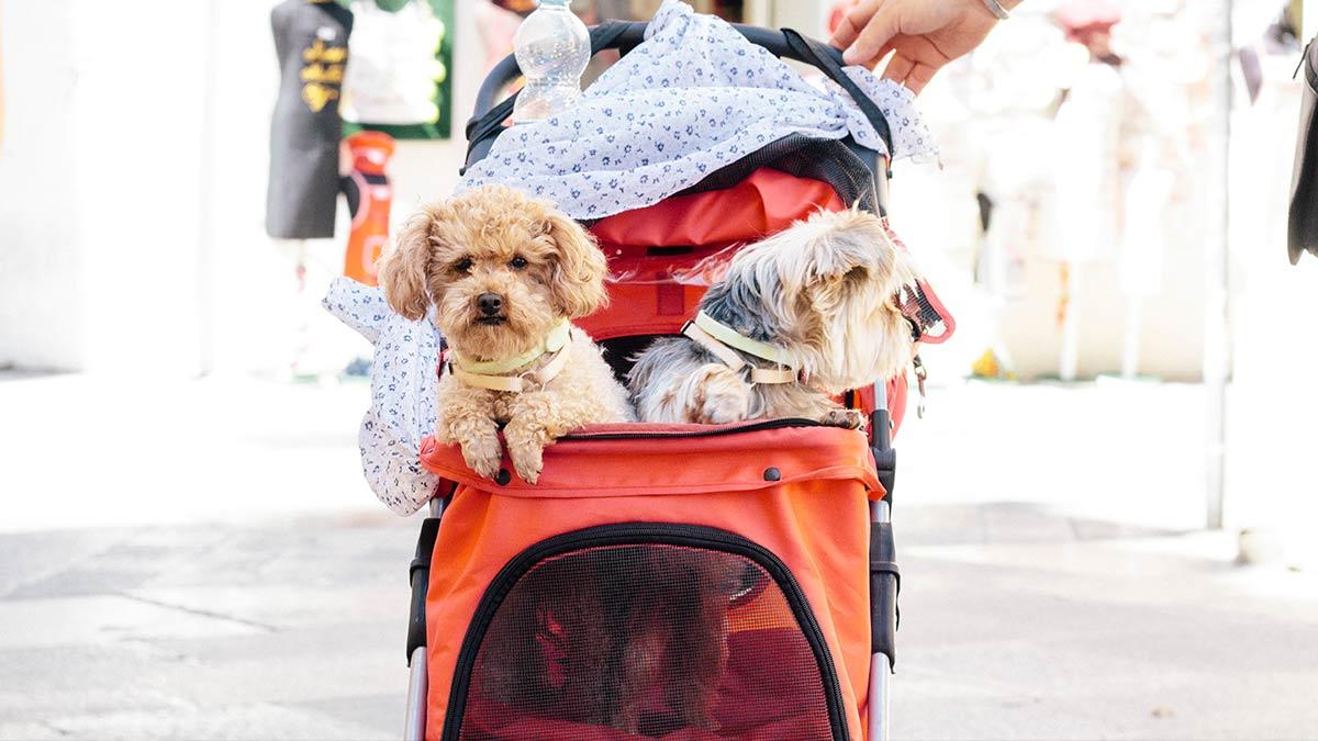 humanizar mascotas