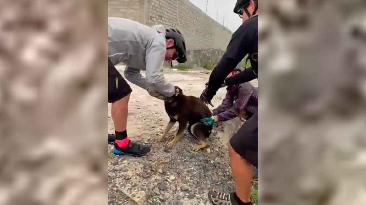 Querétaro: Perrito se atora con botella de Pet y ciclistas lo ayudan