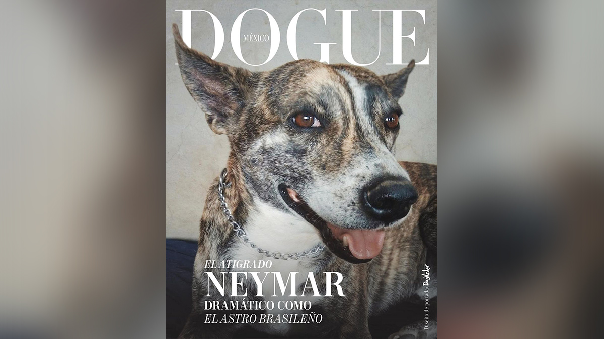 Dogue México, perritos simulan ser estrellas de revista para adopción