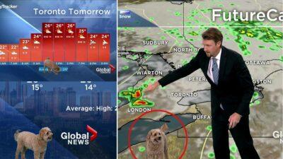 """Perro se """"roba"""" cámara al colarse durante el segmento del clima"""