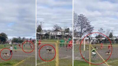 Un perro se convirtió en estrella de las redes sociales cuando anotó un gol durante un partido en Chile, el momento se volvió viral.