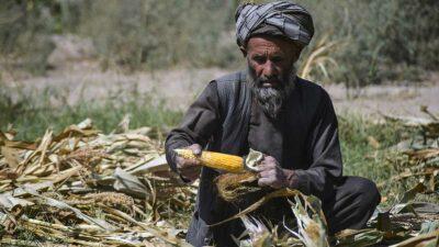 Talibanes lanzan programa contra el hambre y desempleo en Afganistán