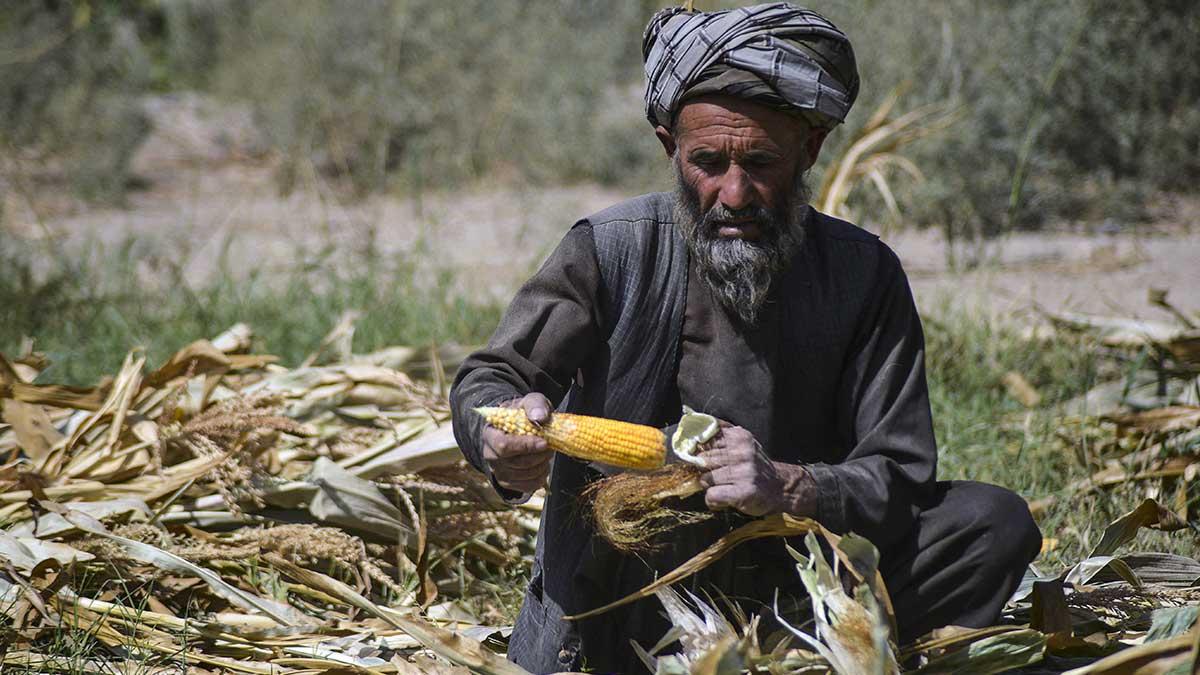 ¿Programa contra el hambre y desempleo en Afganistán? Esto anuncian talibanes