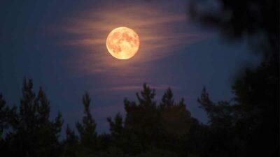 Luna De Cazador