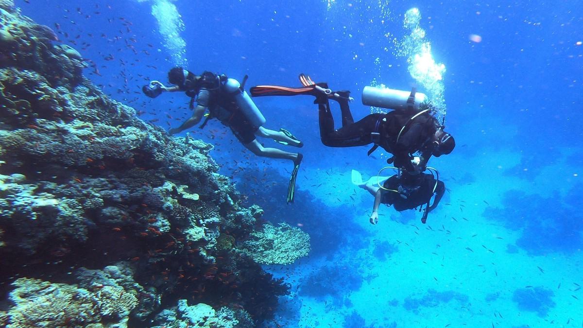 Mar Rojo Corales