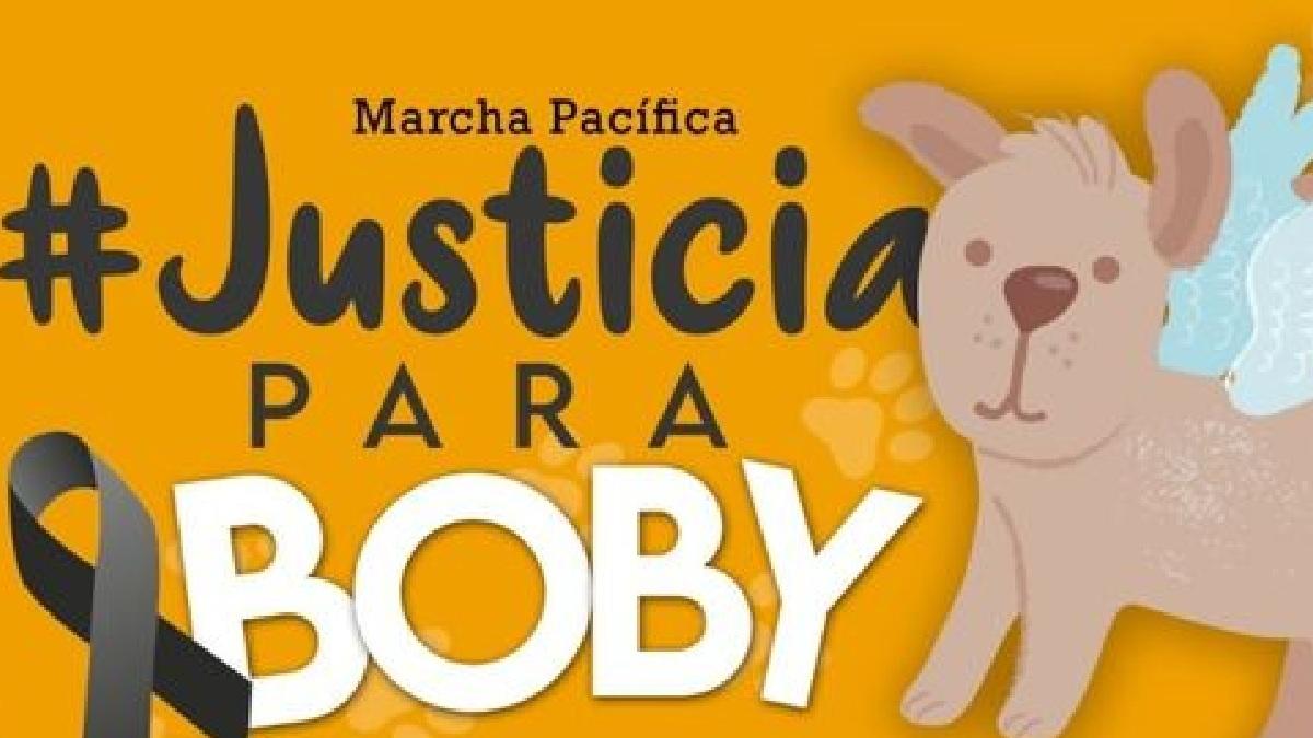 Michoacán: #JusticiaParaBoby, alistan marcha en Morelia por perrito maltratado