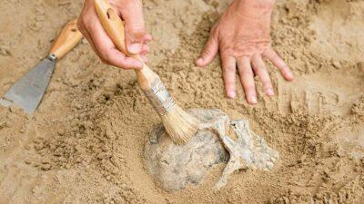 Perú: Hallan restos de 29 cuerpos de hace más de mil años