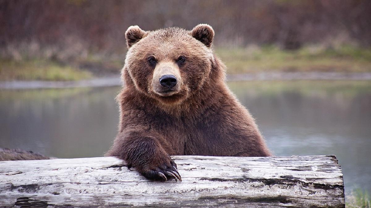 Nuevo León: hombre ataca con gas a oso; redes condenan el acto