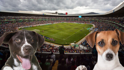 Lomitos podrán asistir a los partidos del Querétaro en La Corregidora