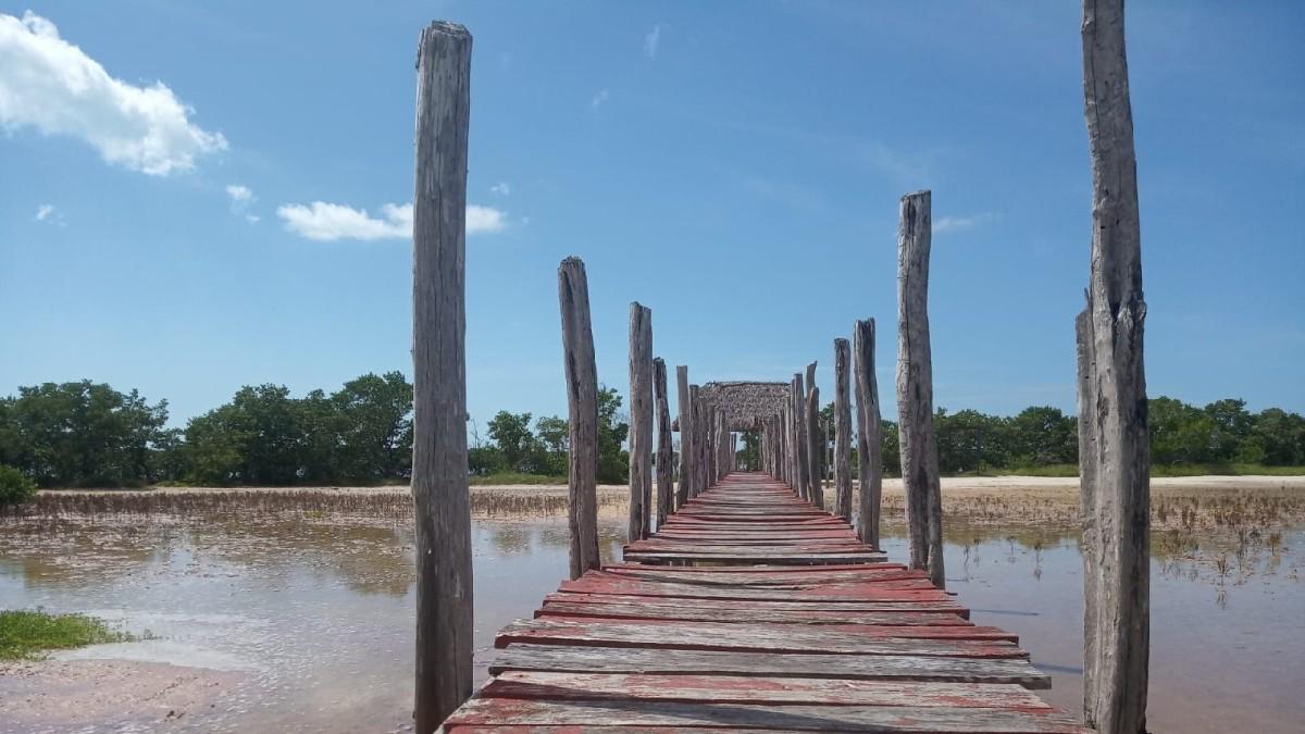 Yucatán: flamingos rosas llegan a las aguas de Celestún