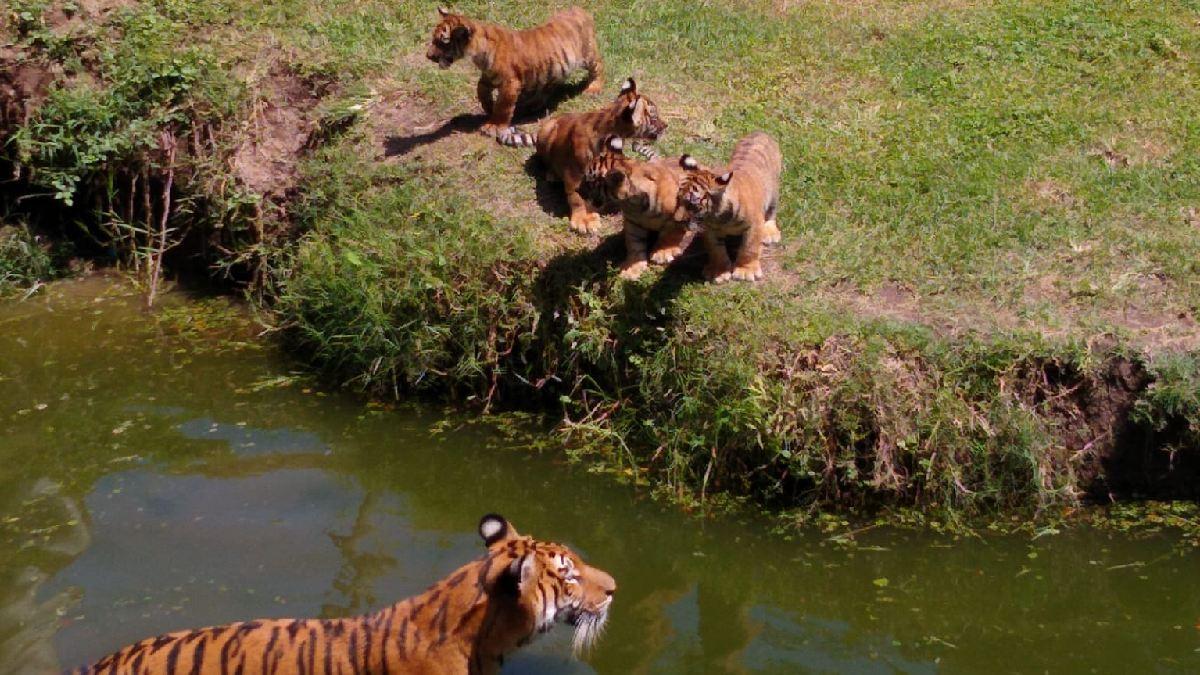Zoológico de Guadalajara: regresa promoción, niños pagan un peso en ingreso