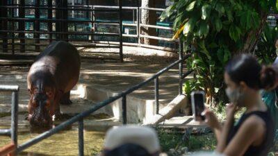 CDMX: Diputado de Morena propone prohibir zoológicos